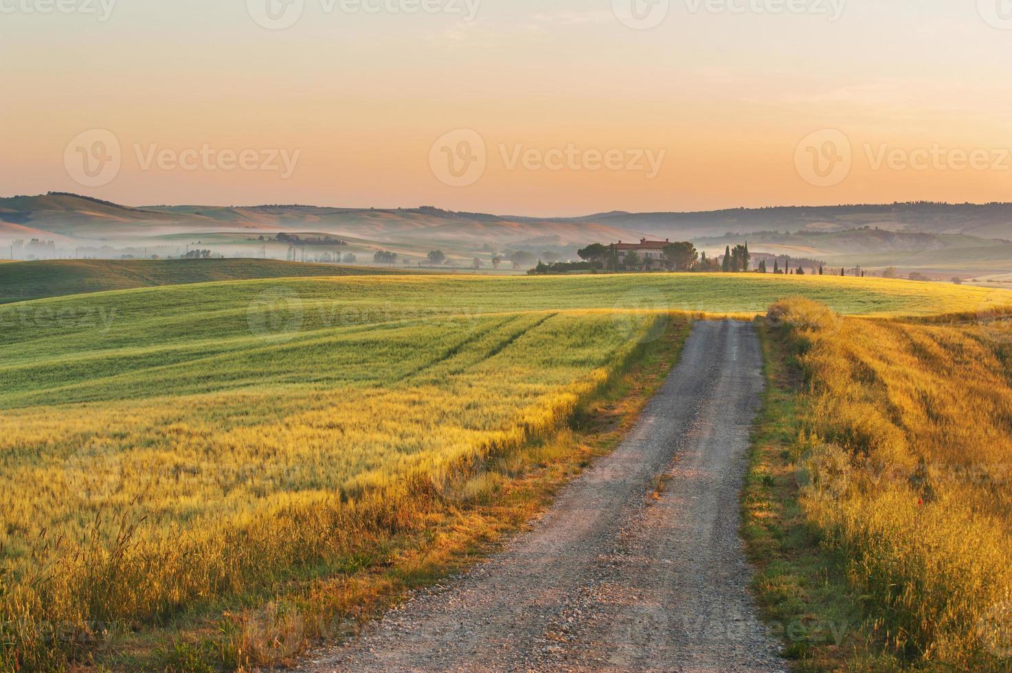 nebbia toscana nel sole dei campi, italia foto