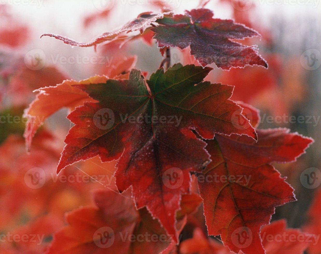 acero rosso frost foto