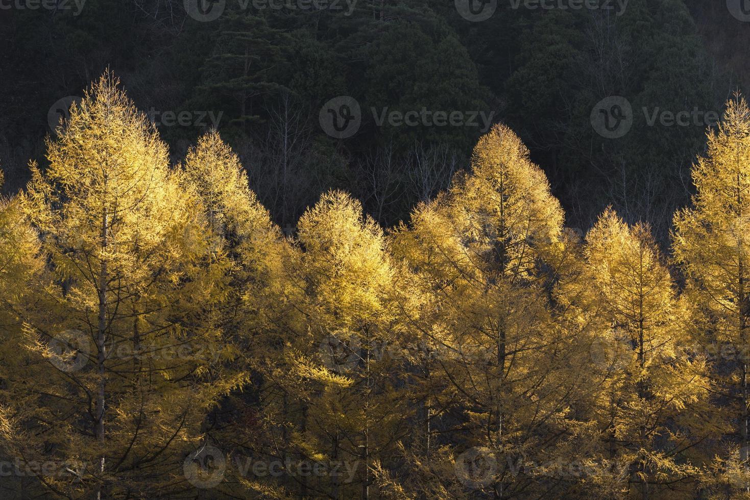 alberi di foglie d'autunno. foto