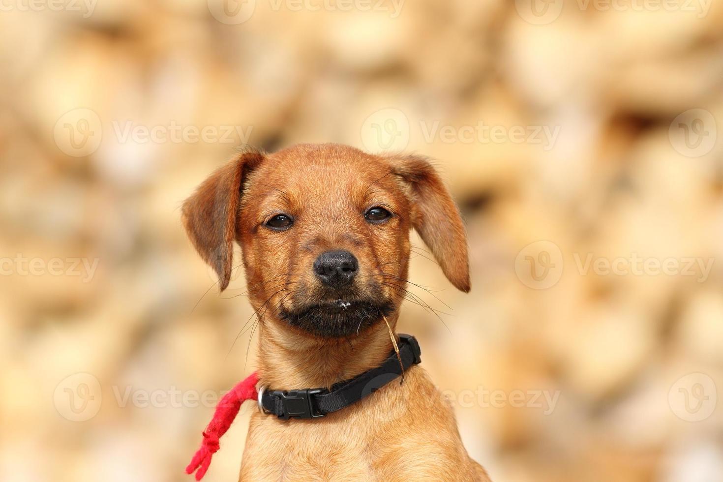 ritratto di cagnolino carino foto