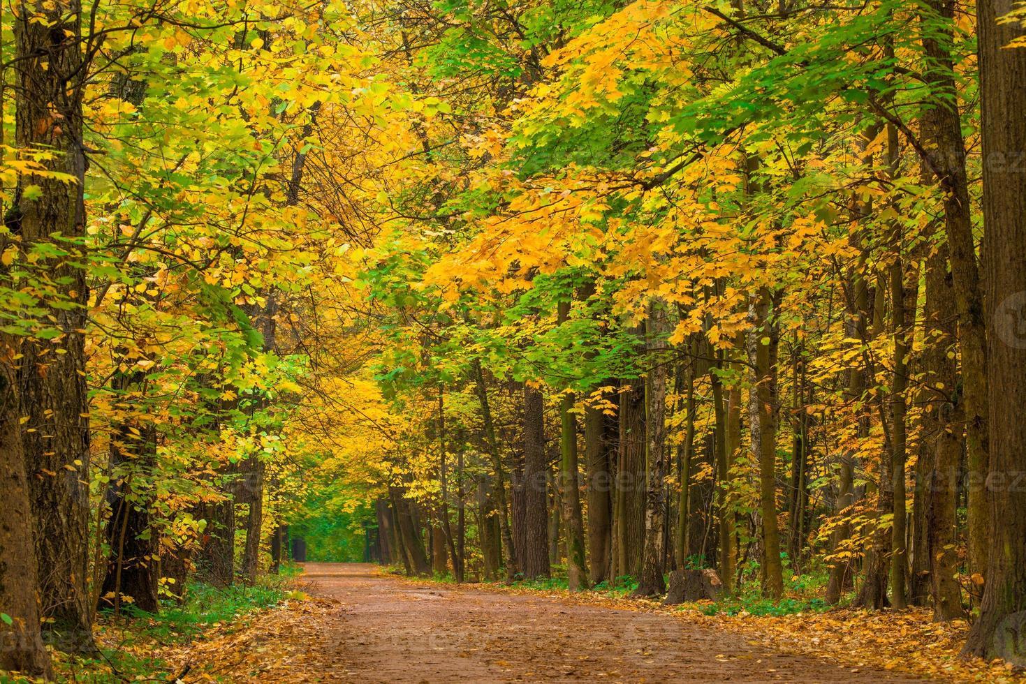 foglie d'acero ingiallite in autunno parco foto