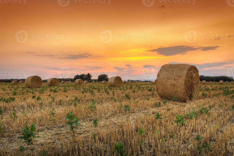 balla di fieno al tramonto in ungheria foto