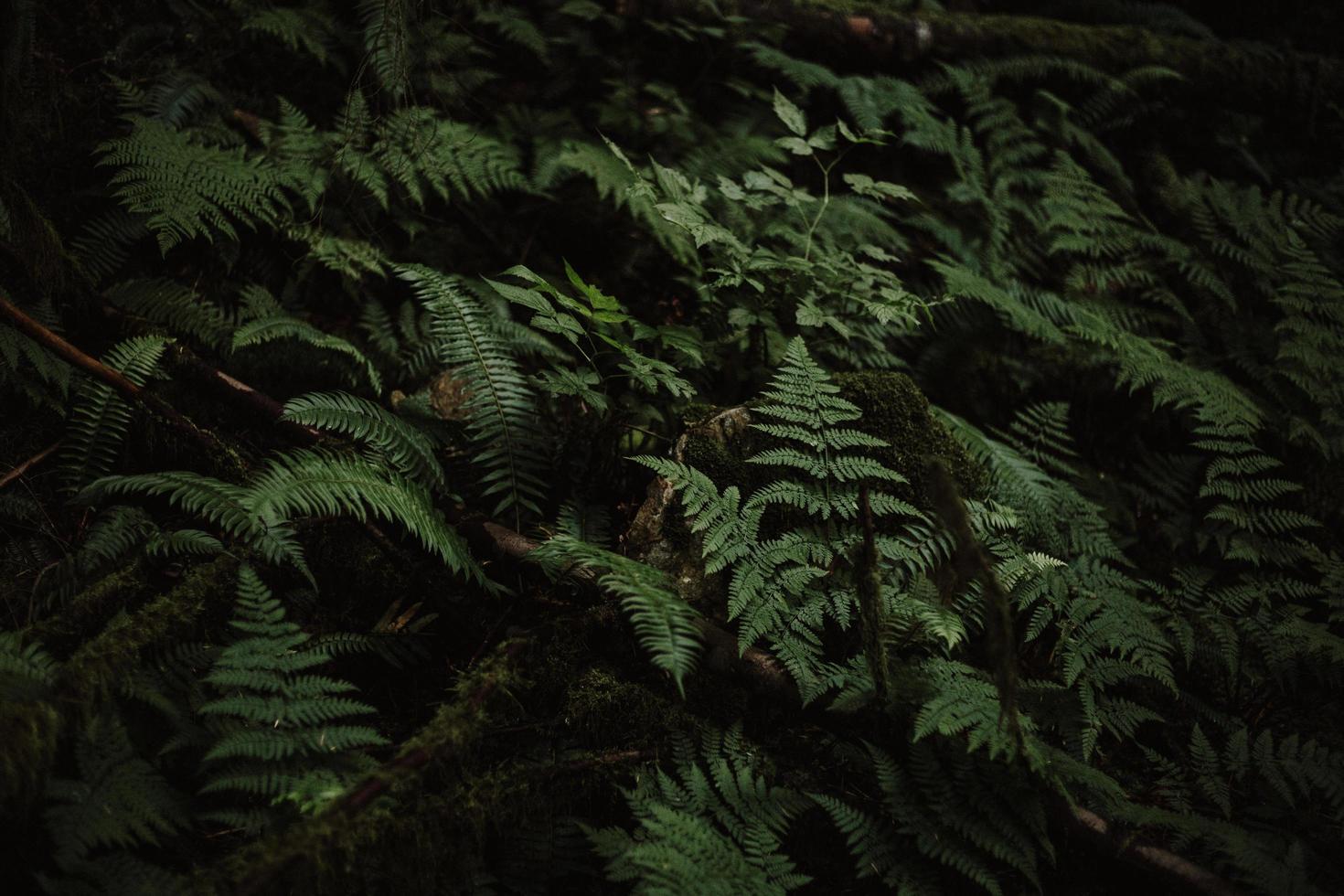 pianta di felce verde illuminata foto