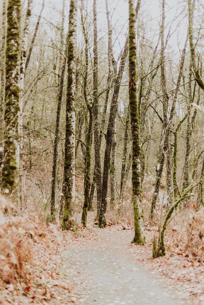 alberi autunnali senza foglie vicino al sentiero nel bosco foto