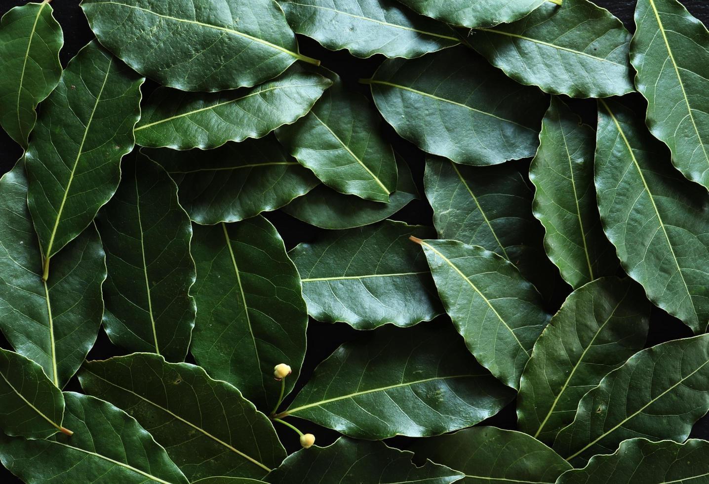 fotografia di foglie di alloro per sfondo alimentare foto