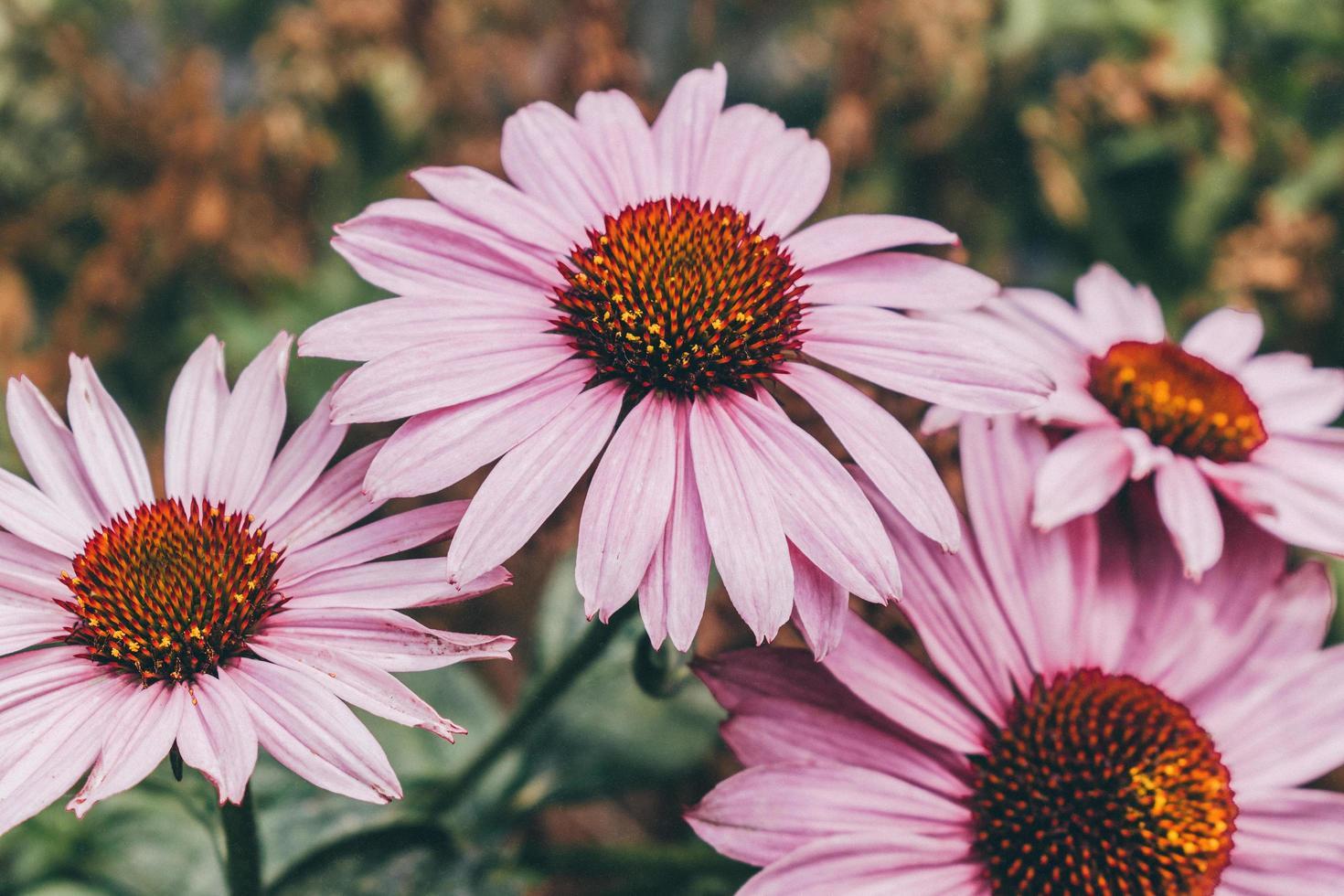 fiori viola nella lente tilt shift foto