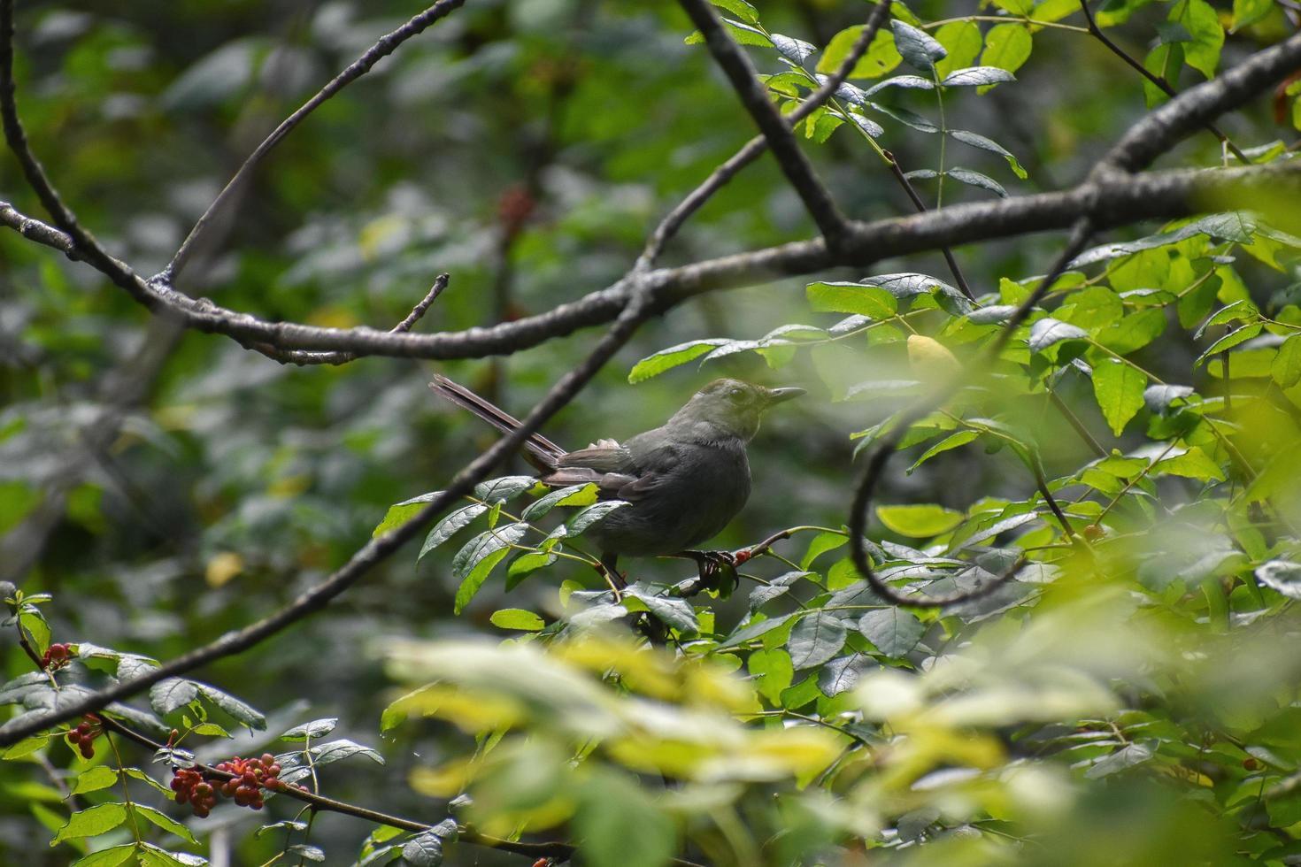 uccello in un albero foto