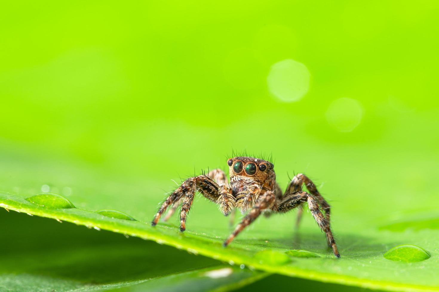 ragno marrone su foglia verde foto