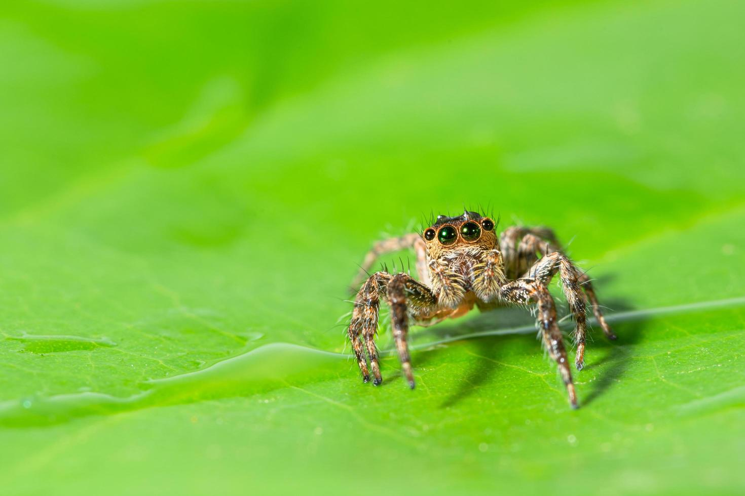 ragno marrone su una foglia verde foto