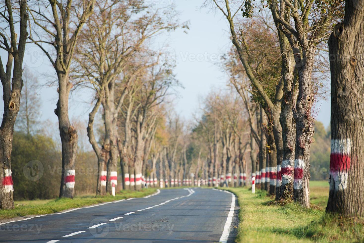 strada curva tra gli alberi foto