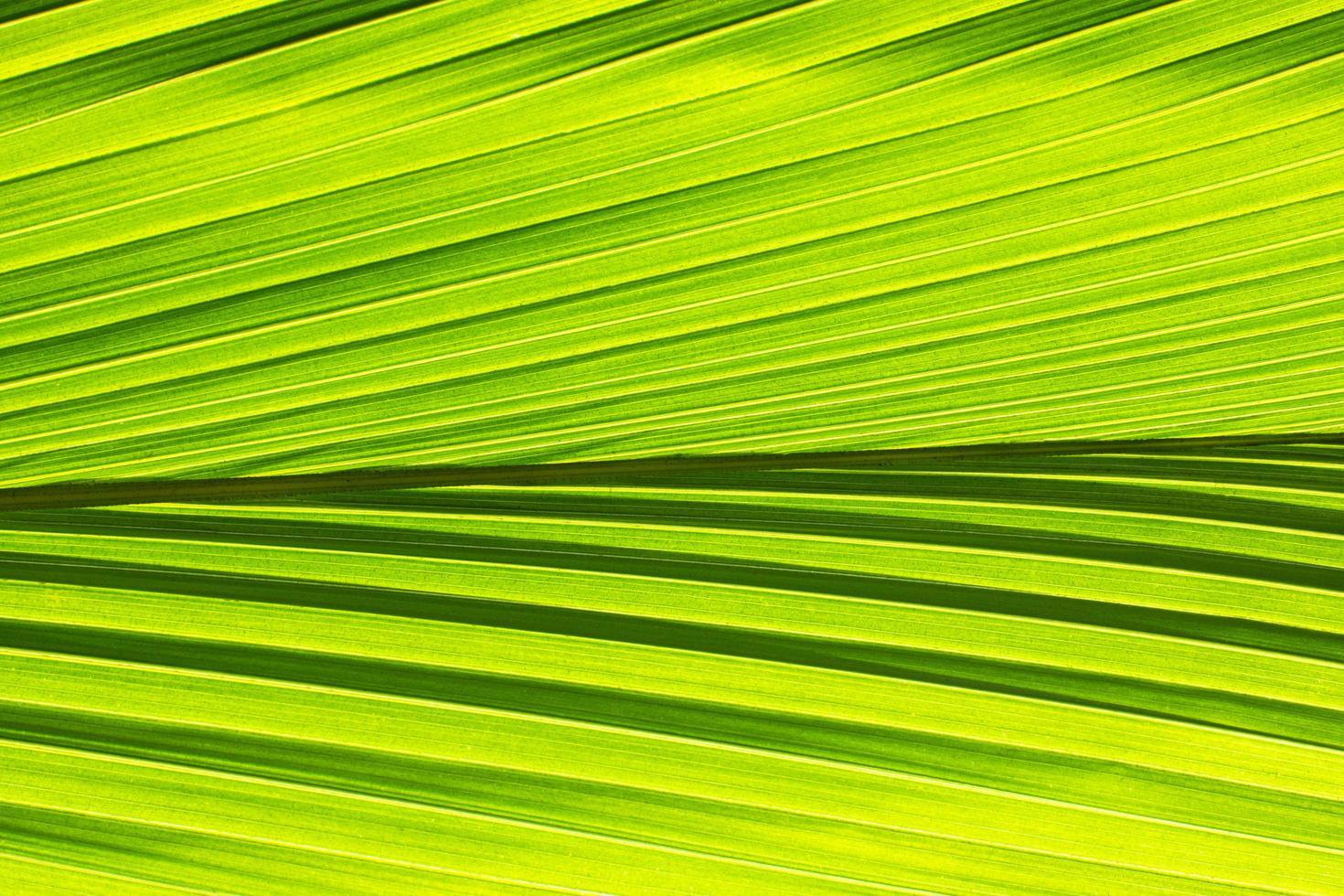 sfondo modello foglia verde foto
