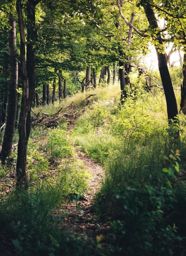 alberi nel campo verde durante il giorno foto