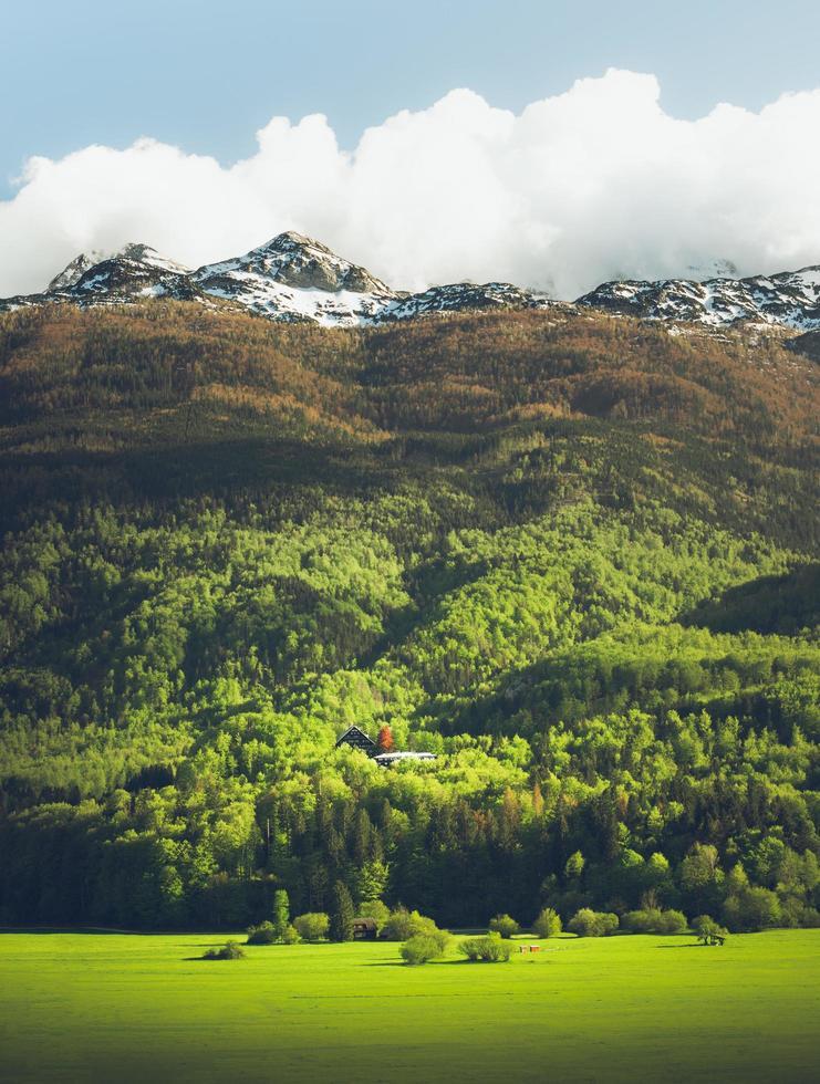 alberi verdi sotto le montagne foto