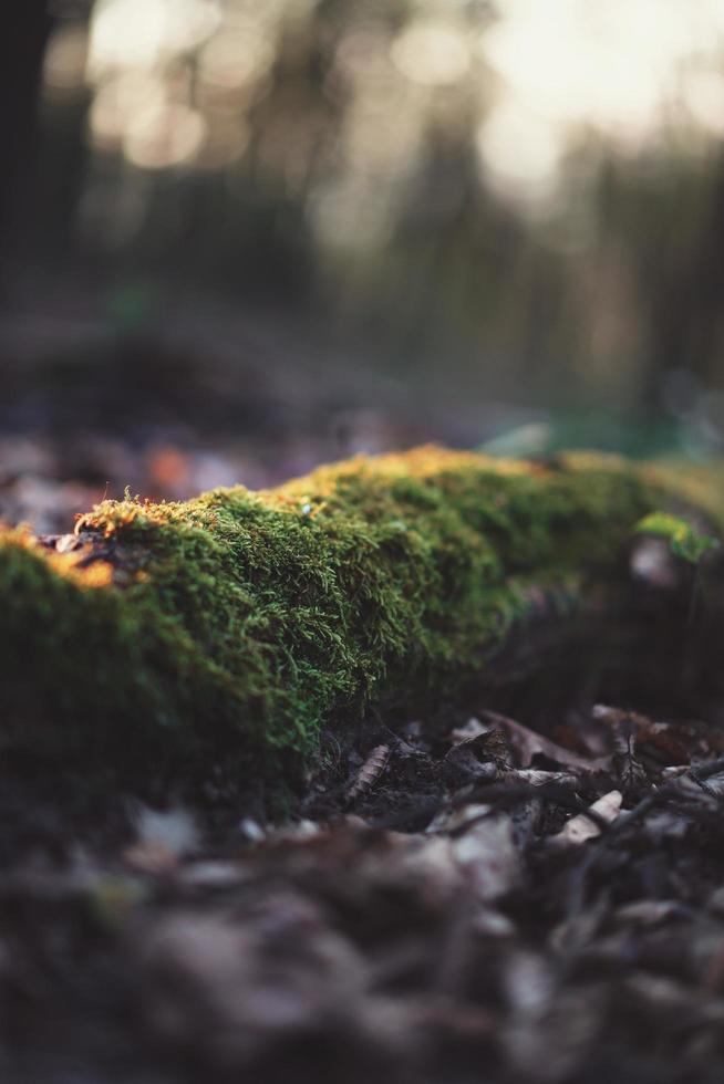muschio sulle radici degli alberi foto
