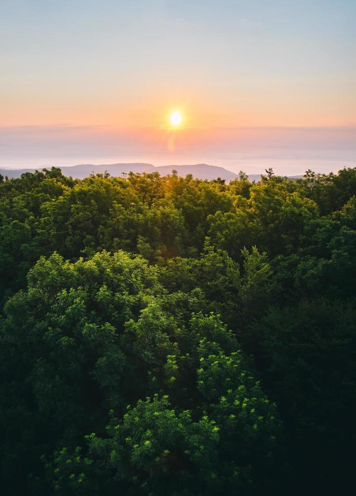 alberi verdi attraverso l'orizzonte durante il tramonto foto
