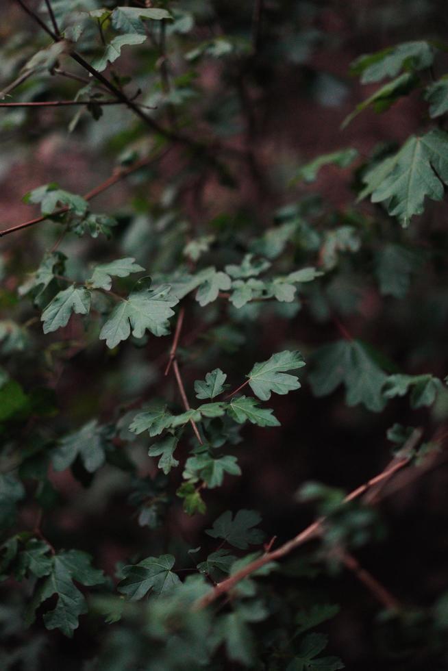 ramo di cespuglio a bassa luminosità foto