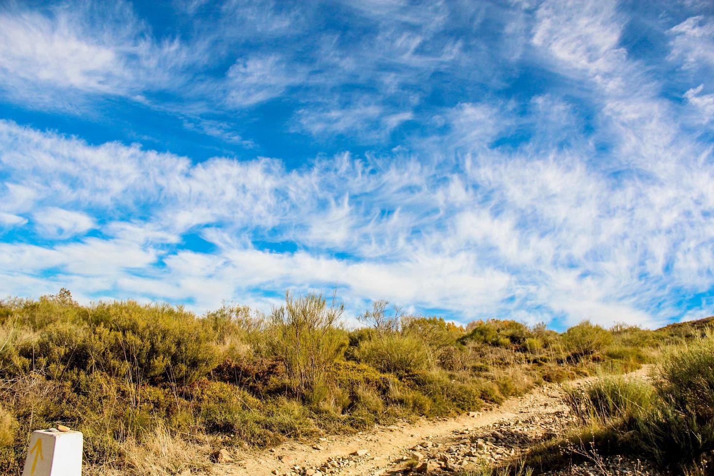 erba secca marrone sotto il cielo parzialmente nuvoloso foto