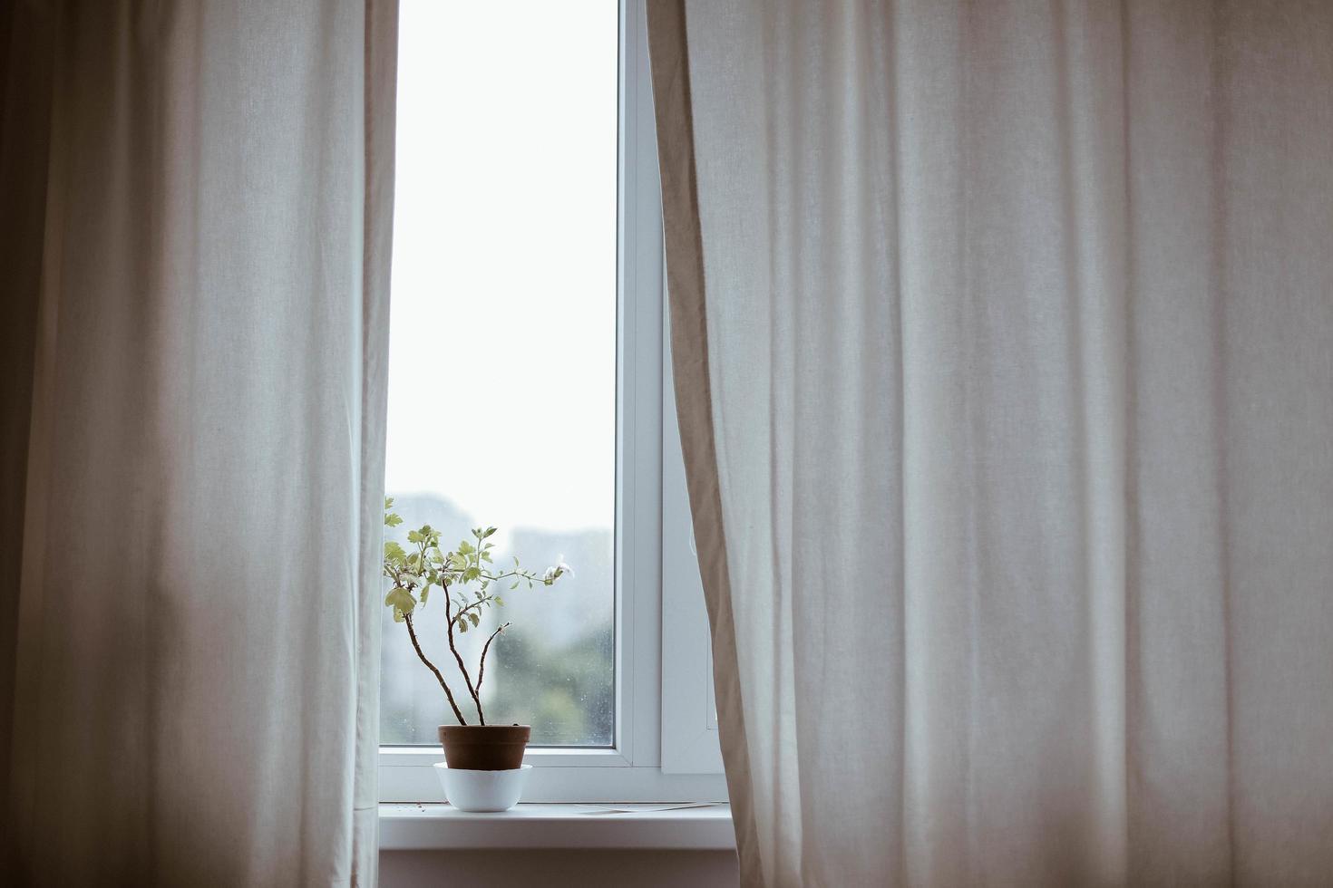 pianta in vaso sul davanzale della finestra con tende foto
