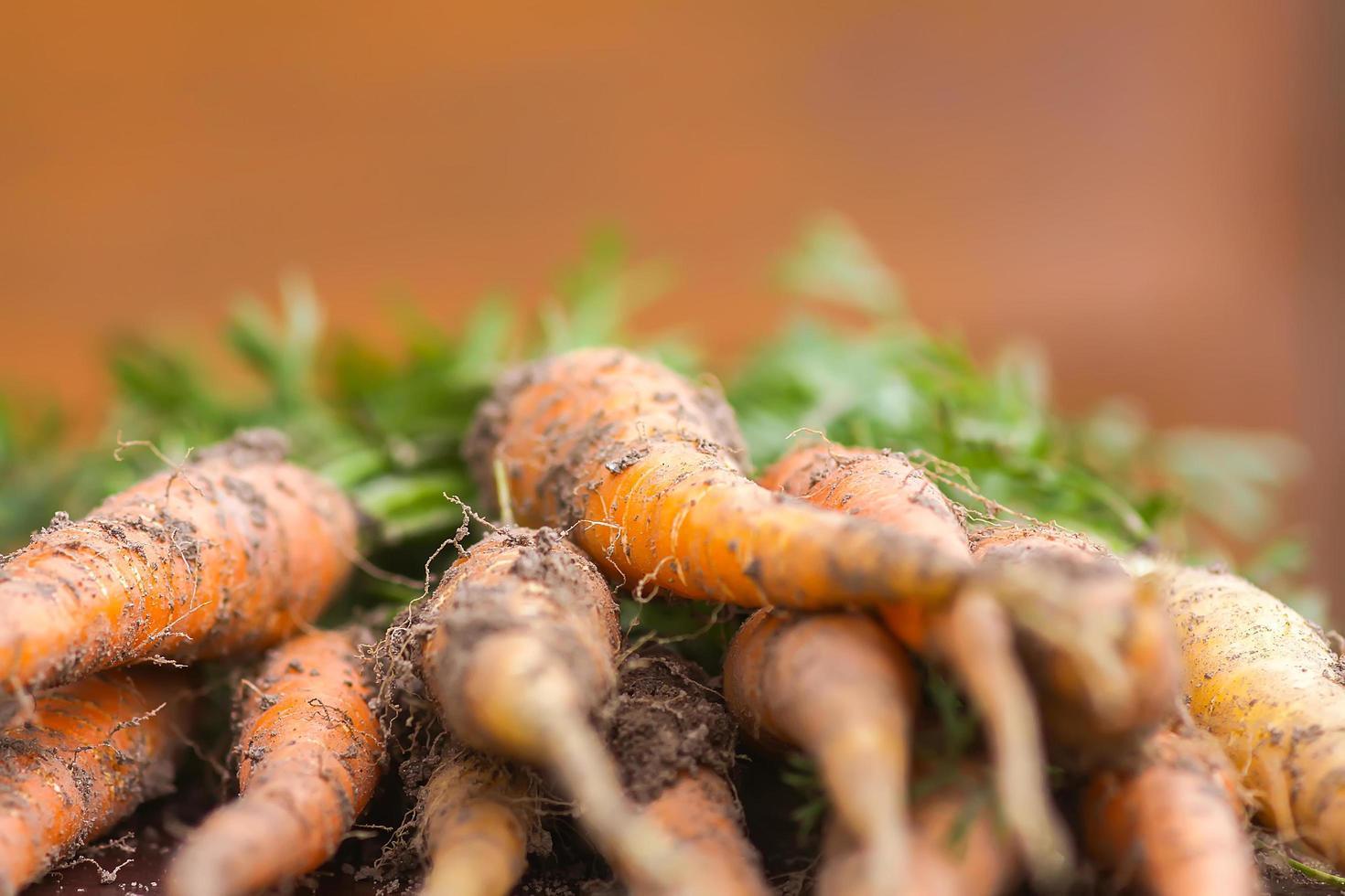 un mazzo di carote foto