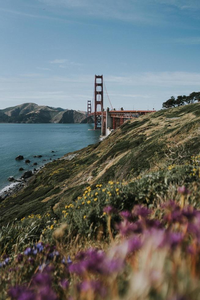 fiori di campo vicino al golden gate bridge foto