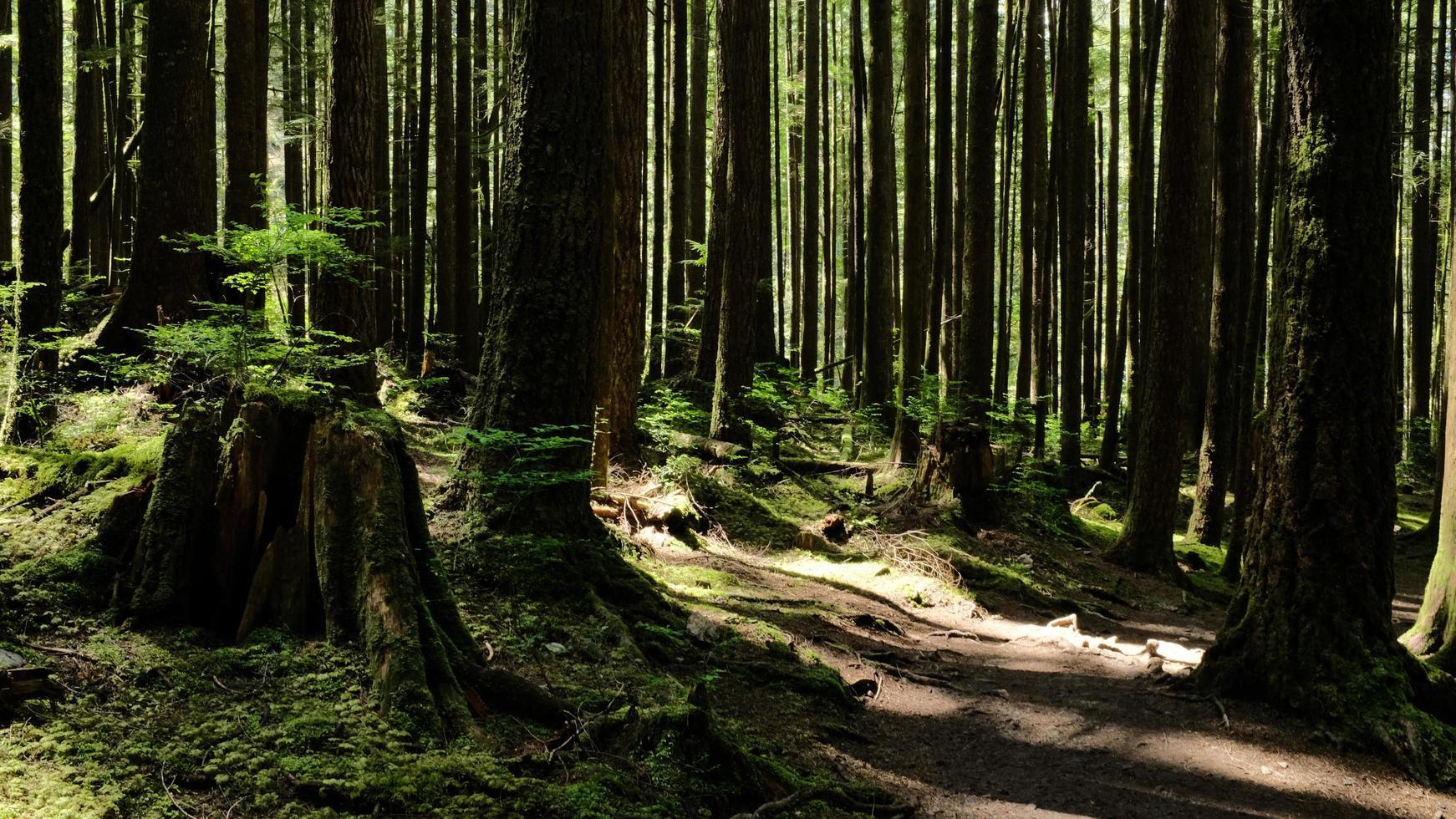 sentiero nel bosco in primavera foto
