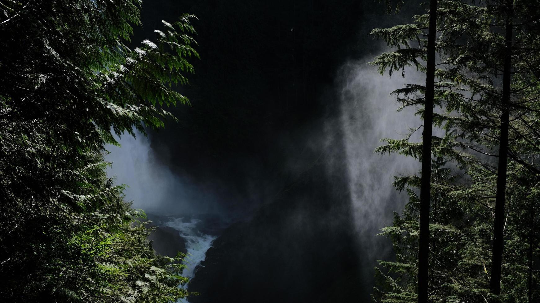 bella luce nel bosco foto