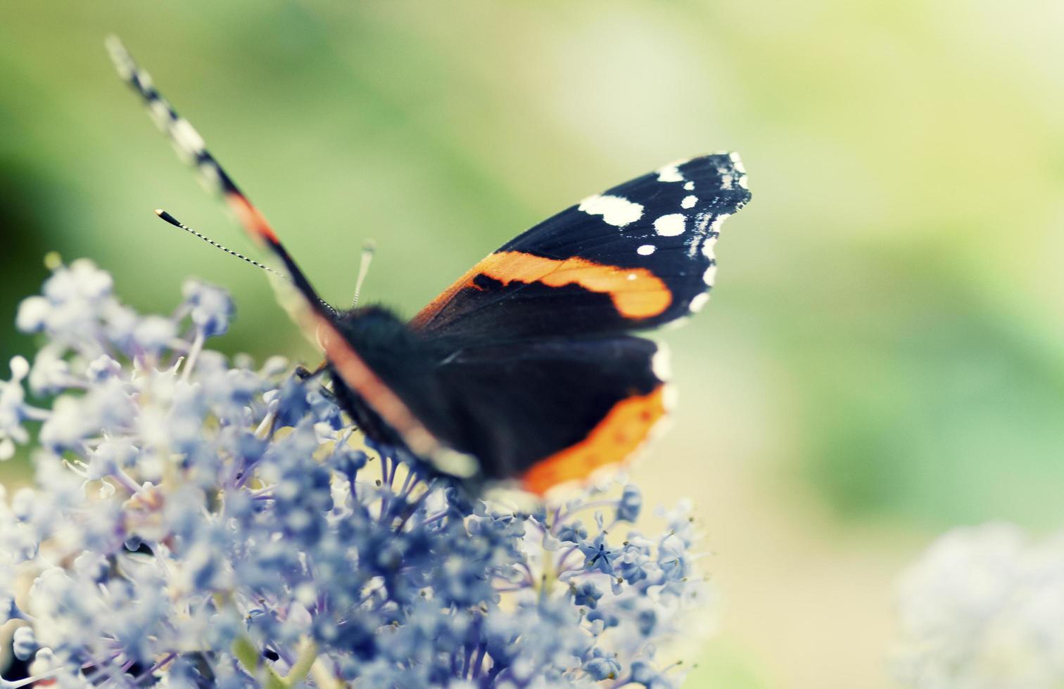 una farfalla colorata su un fiore foto
