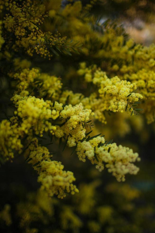 primo piano della pianta floreale gialla foto