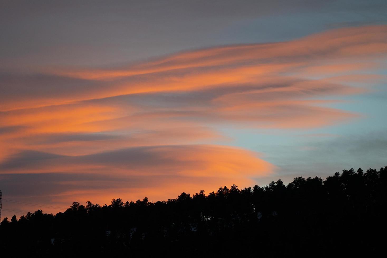 sagoma di alberi durante il tramonto foto