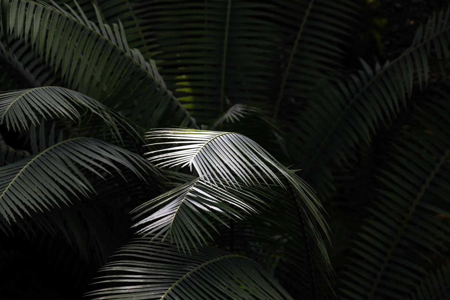 luce solare che colpisce la foglia di palma foto