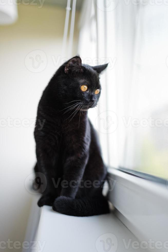gatto nero britannico seduto su un davanzale foto