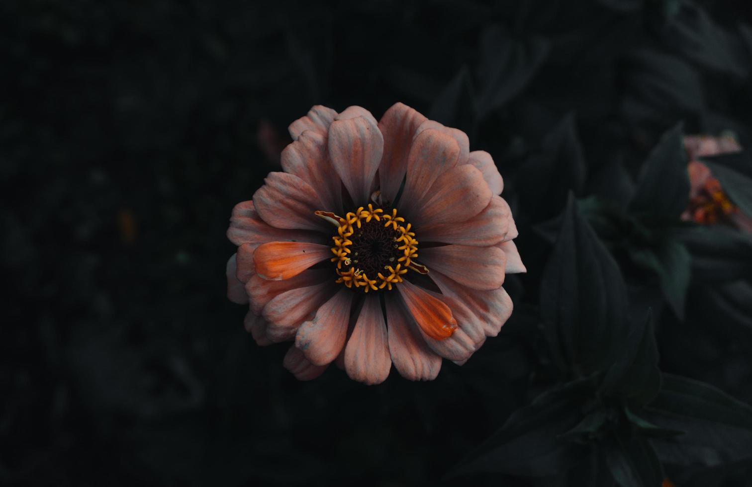 margherita in giardino foto