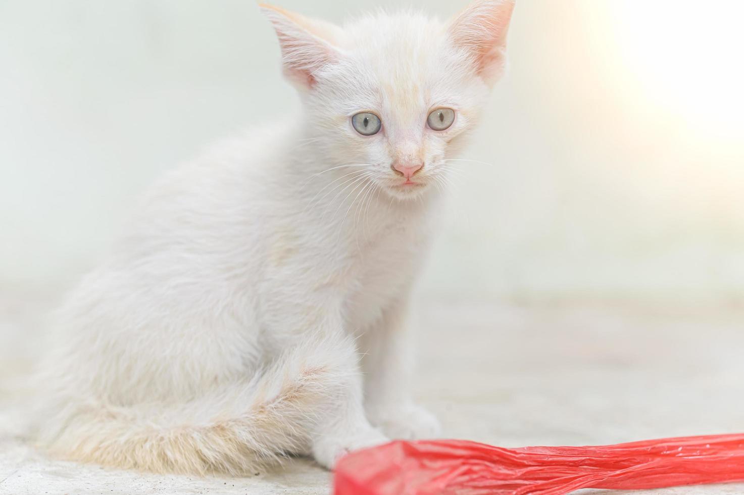 inquadratura ravvicinata di un gattino bianco foto