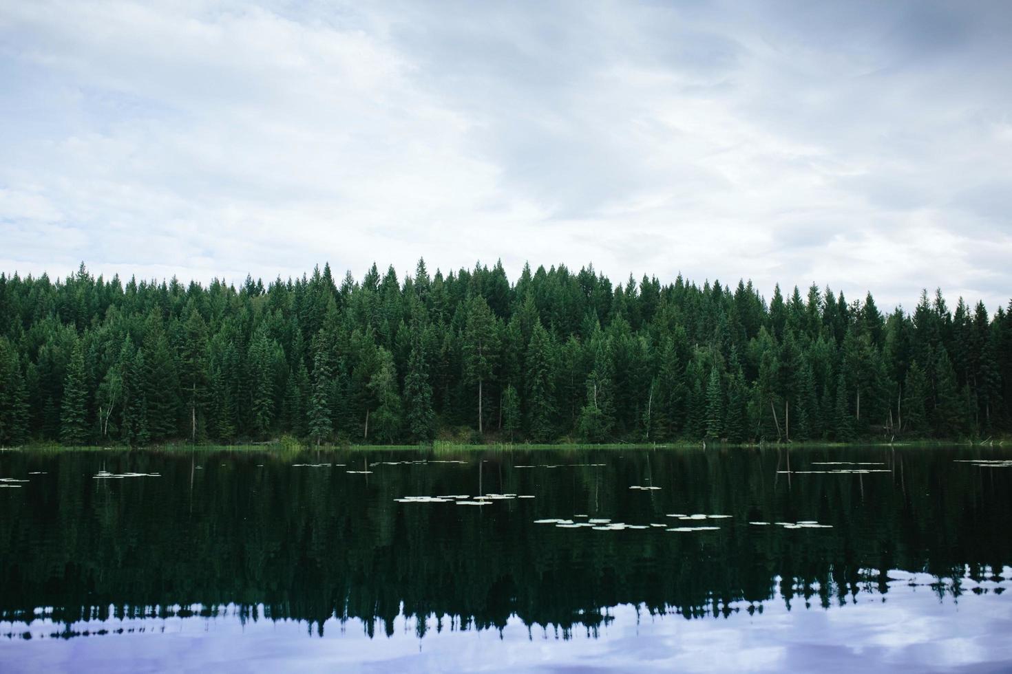 alberi verdi accanto al corpo d'acqua sotto il cielo nuvoloso durante il giorno foto