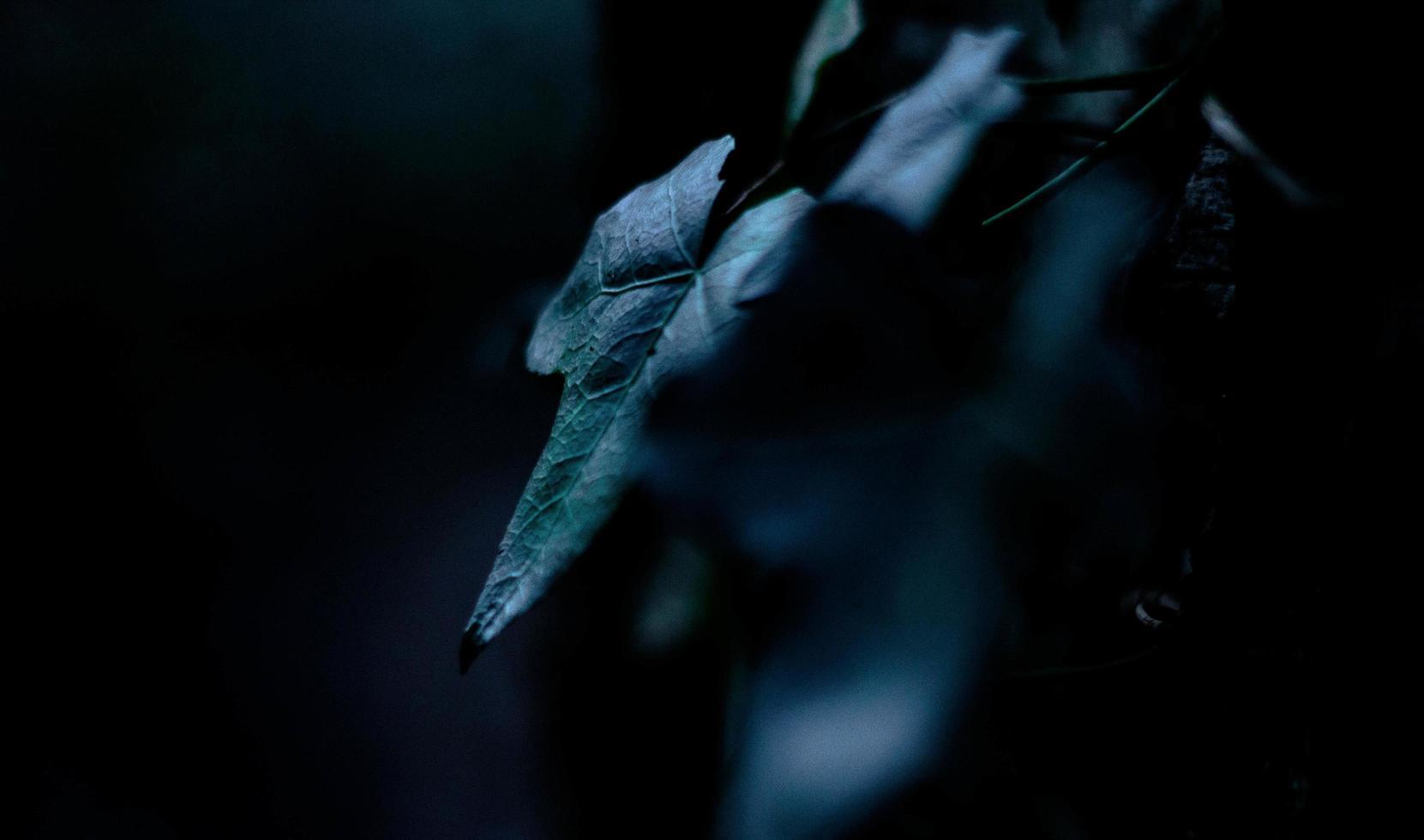 foglie d'edera di notte foto