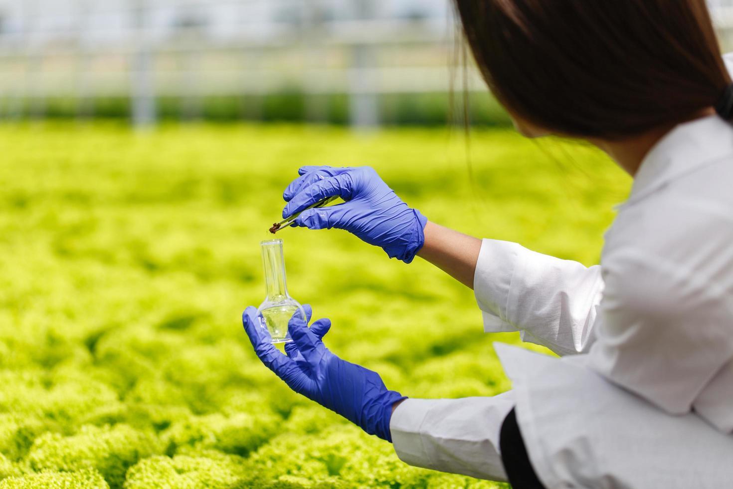 il ricercatore prende una sonda di vegetazione in un pallone a fondo tondo foto