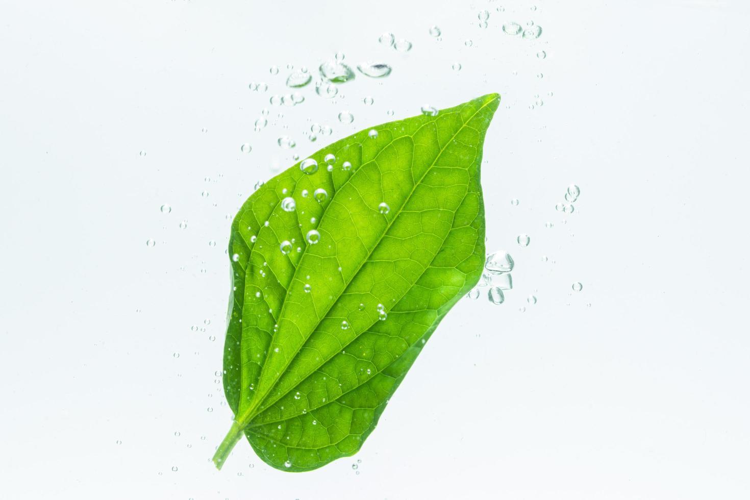 foglia verde e bolle nell'acqua foto
