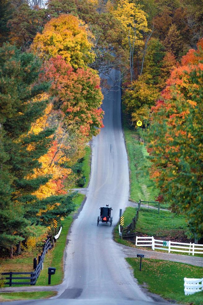 vecchio cavallo e carrozza attraversando la strada durante il giorno foto