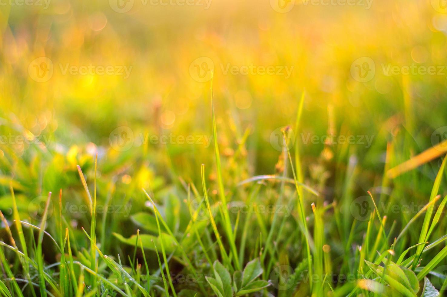 sfondo della natura con erba al tramonto foto