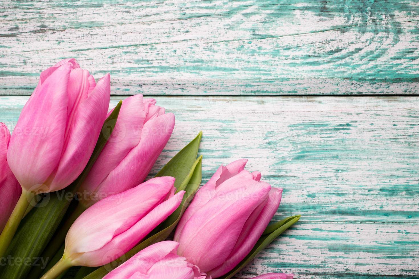 tulipano. foto
