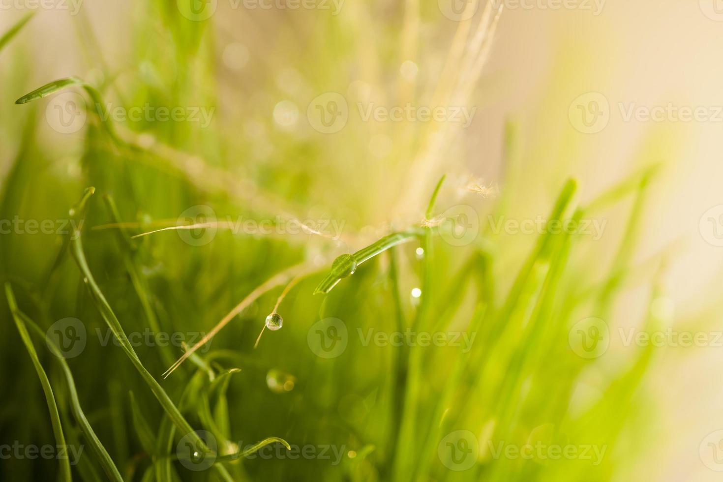 primo piano luminoso foglie di erba con rugiada foto