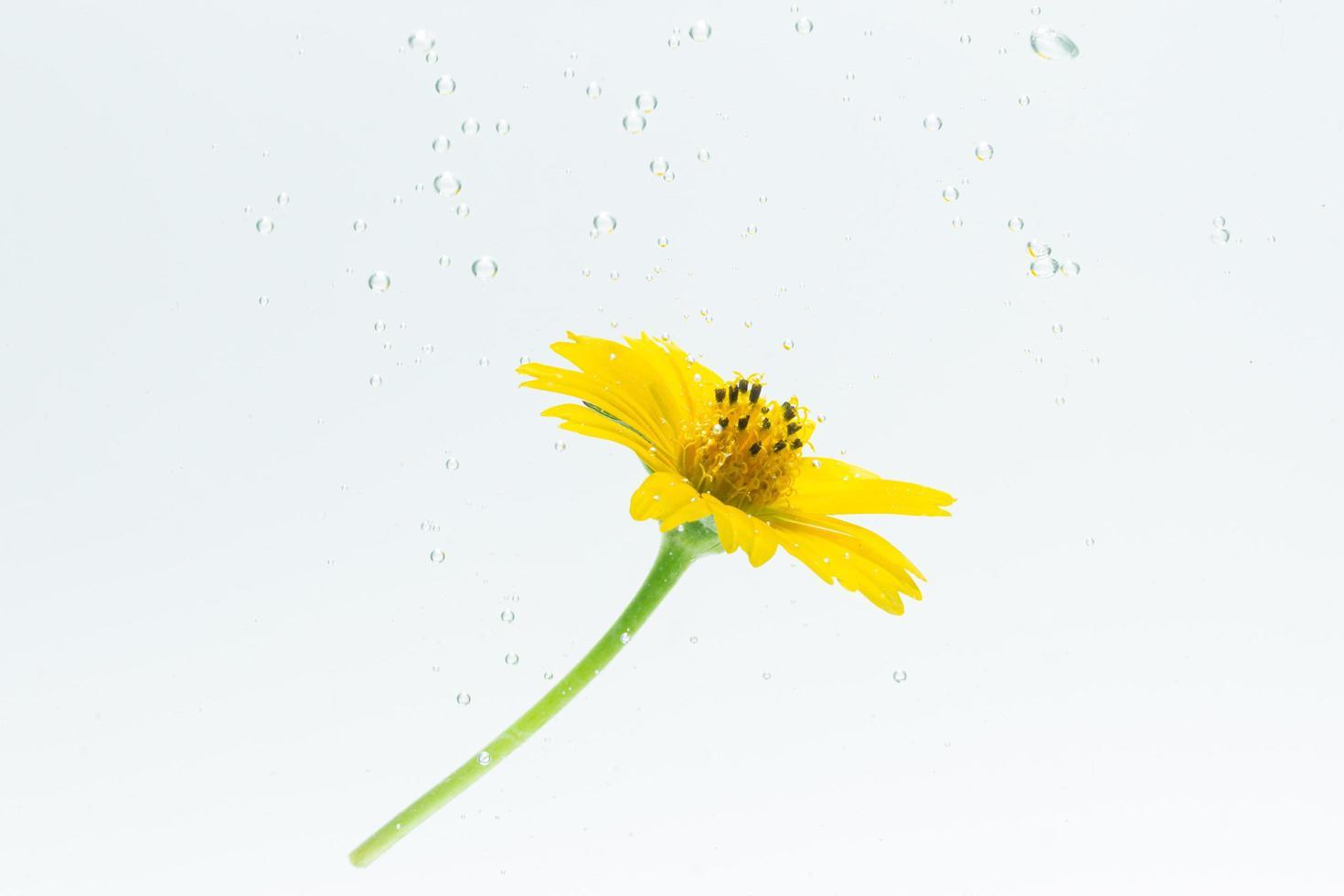 primo piano di un fiore giallo in acqua foto