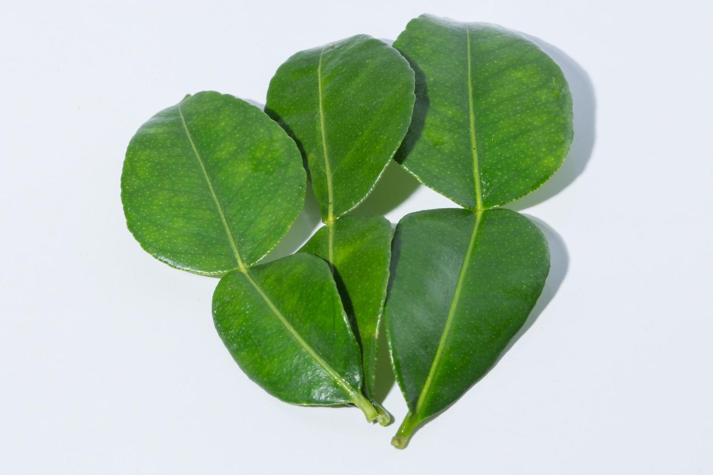 foglie di citrus hystrix su sfondo bianco foto