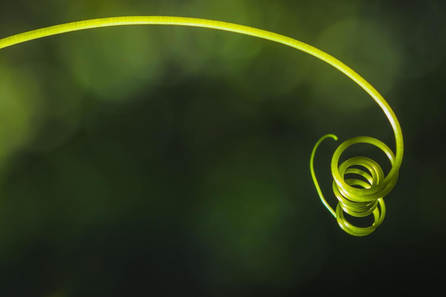 zucca baffi su sfondo verde foto