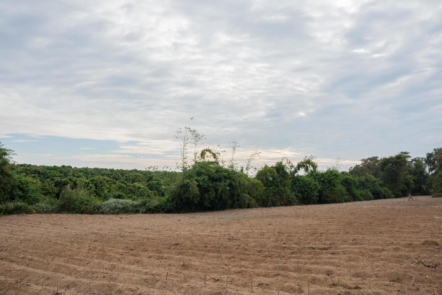 terreno coltivato in campagna foto