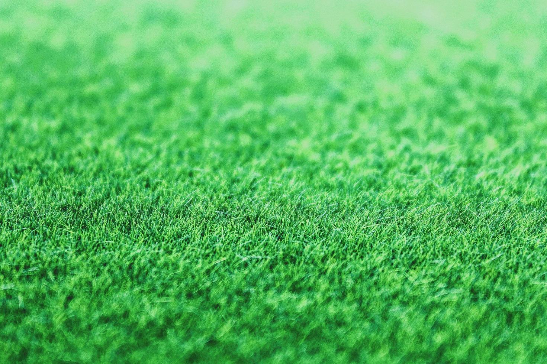 trama di sfondo erba verde foto