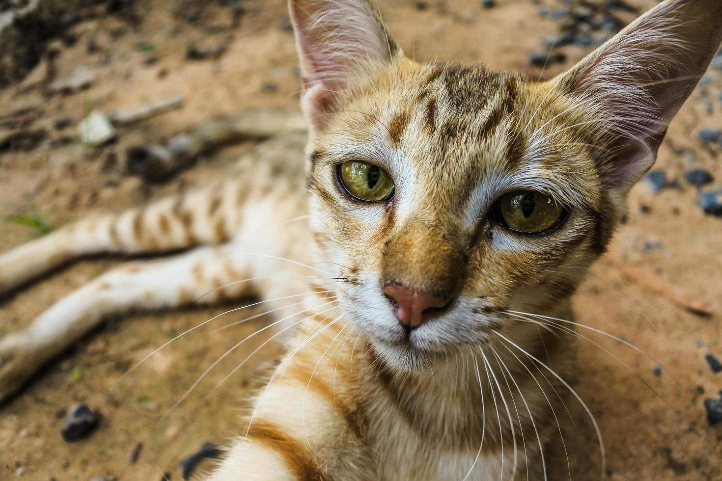 giovane gatto randagio foto