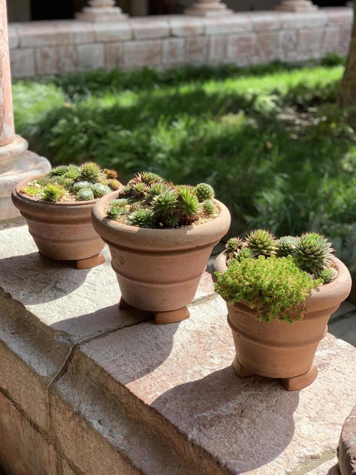 piante in vaso su ringhiera in cemento foto