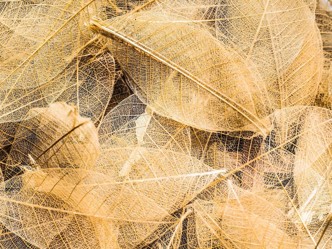 vista dall'alto di bellissime foglie decorative trasparenti foto