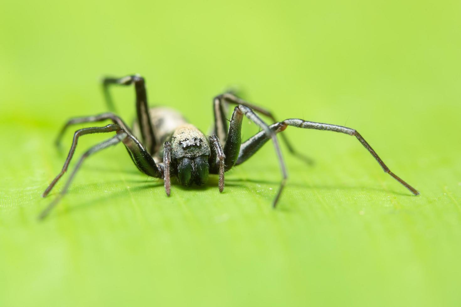 macro ragno su una foglia foto